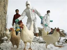 птичий,грипп