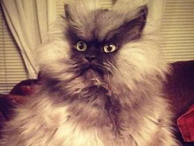 Генерал Мяу,кот