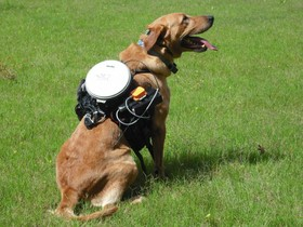 собака с технологией регулирования