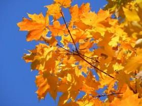 осень, золотая осень