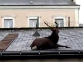 бык на крыше