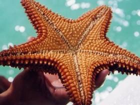 Океанские звезды