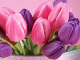 8 марта,тюльпаны