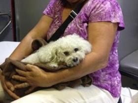 Во Флориде малый пес уцелел за падением с 16-го этажа