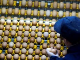 яйца,инкубатор,
