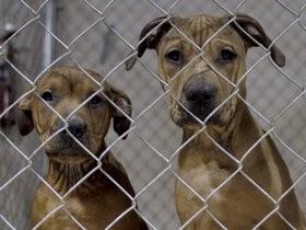 бездомные,собаки