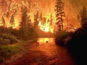 лесной,пожар