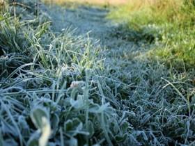 Киев накроют заморозки
