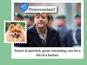 Ангела Меркель — померанский шпиц