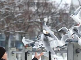 зима,голуби,