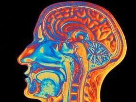 наш головной мозг