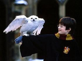 Обладатель сов Гарри Поттера безжалостно обращвется с животными