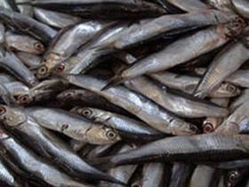 Стачка рыболовов Франции не принесла нужных итогов