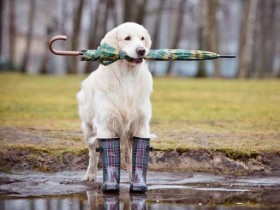 дождь,весна,