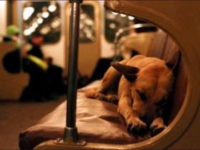Бомжи собаки катаются в столичном метро