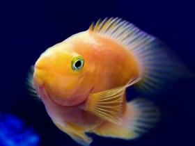 """У рыб нашлась """"океанская болезнь"""":их укачивает, как людей"""