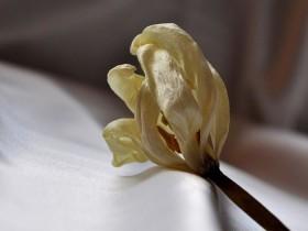 увядший цветок
