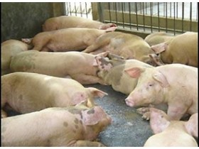 Сегодня власти обсудят картину со свинным гриппом