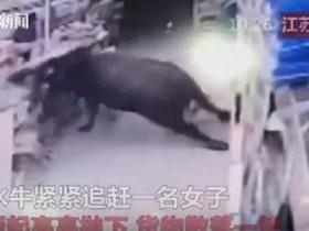 буйвол в магазине