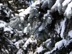 елка,зима,лес