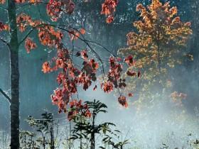 осень, ноябрь