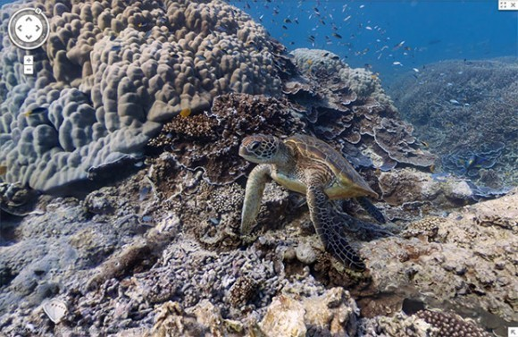 Google применяла особую камеру для подводных съемок