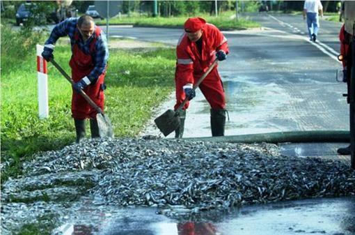 В Польше из фуры высыпалось 24 тонны сардин