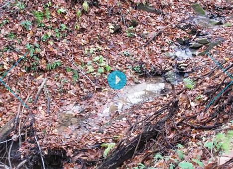 В Карпатах подсохли речки и колодцы