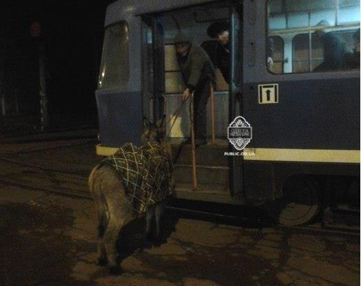 Одессит старался проехать с ишаком в трамвае