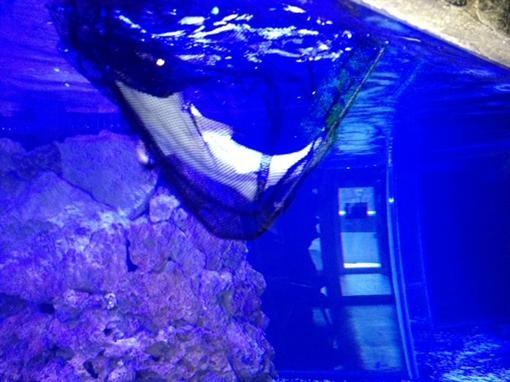 В Евпаторию доставили небольших акул