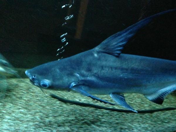 Камалия расхвасталась собственной рыбой (фото)