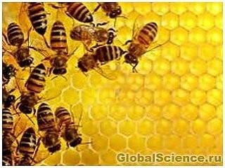 Глобальная смерть пчел может привести к всемирному кризису