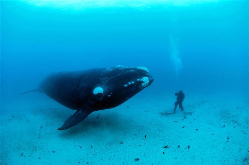 В Аргентине в начале июня стартует год исследования за китами
