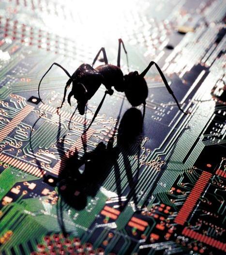В Соединенных Штатах и Бразилии муравьи поселяються в ПК