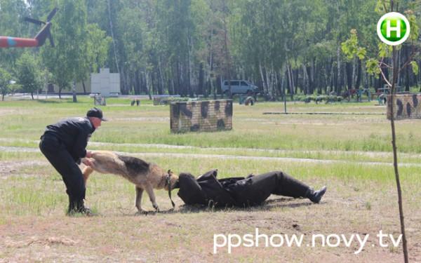 "На ведущих ""Педан-Притула Шоу"" совершили нападение собаки (фото)"