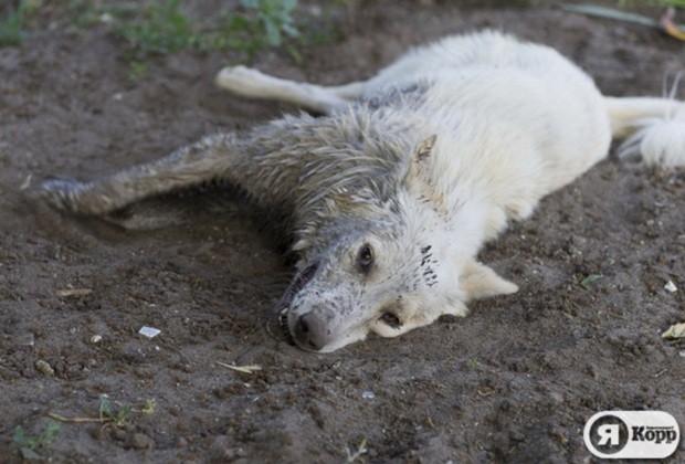 В Киеве широко погибают бомжи животные