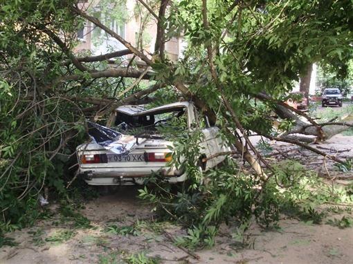 В центре Харькова дерево расплющило 2 автомашины