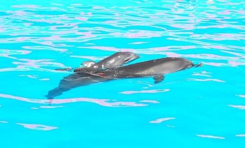 """В Одесском дельфинарии """"Немо"""" появился на свет дельфиненок"""