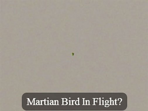 Исследователи установили на Марсе внеземную птицу