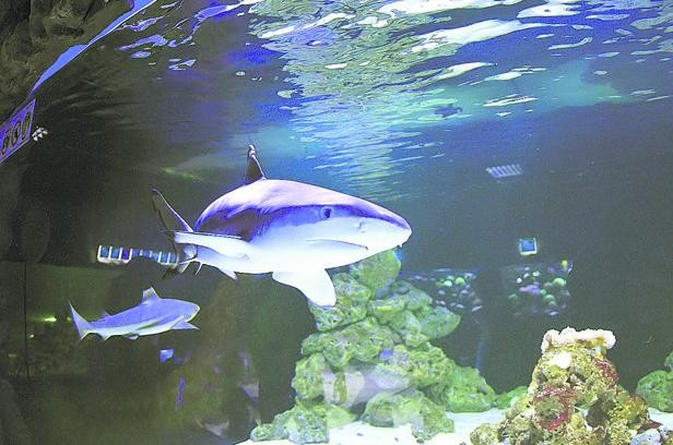 В киевский ТРЦ заняли спортивную акулу