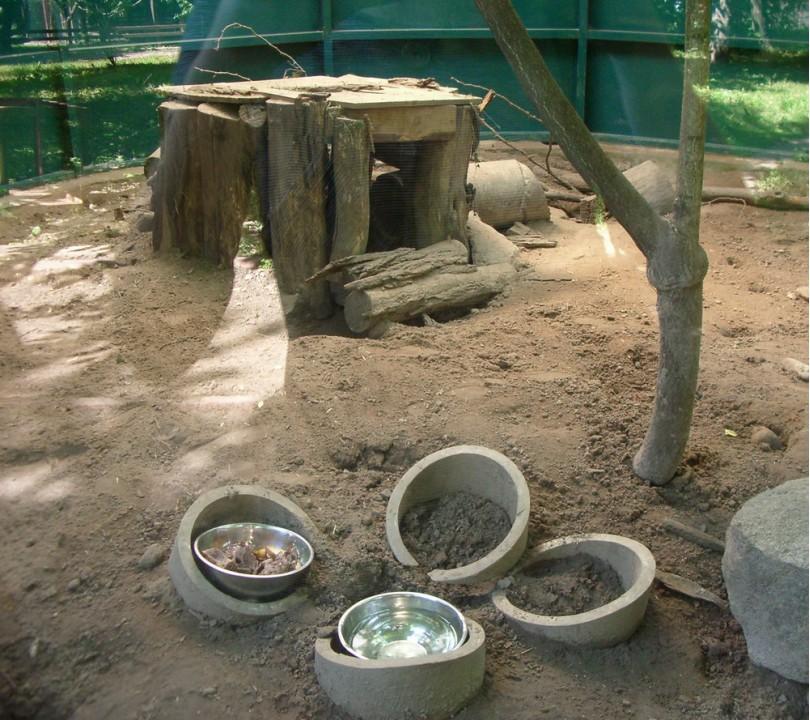 Киевский зоопарк утрачивает статус дома для животных