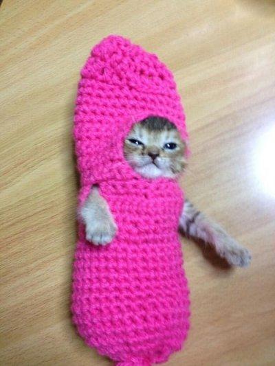 Кошечку Васаби от гибели выручил наряд грибочка (ФОТО)