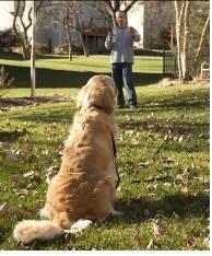 Garmin продемонстрировала устройства для дрессировки собак