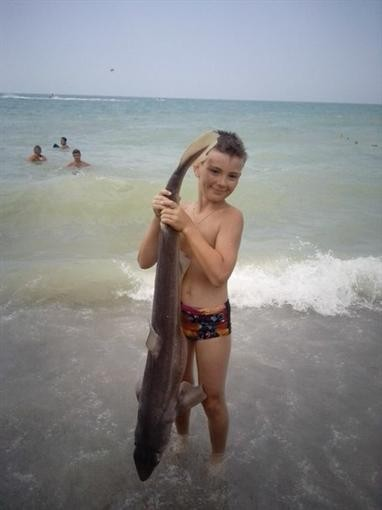 В Крыму до гибели завертели акулу
