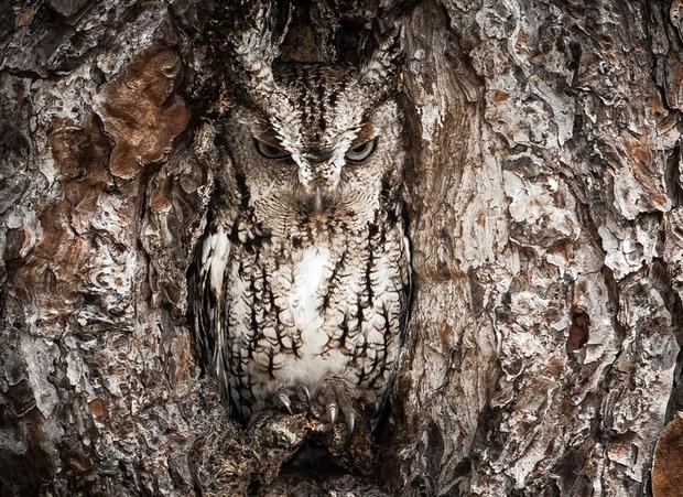 National Geographic: Лучшие фото, сделанные в путешествиях