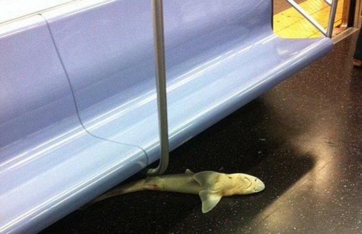 В метрополитене Нью-Йорка нашли скончавшуюся акулу
