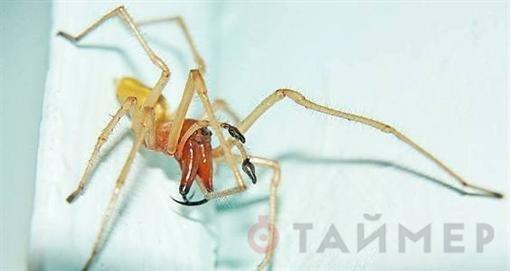 Под Одессой вышли пауки, чей укус закрывает до 6 месяцев