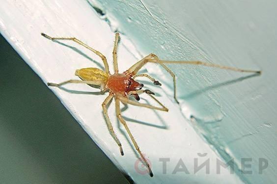 В Одеской области вышли токсичные пауки