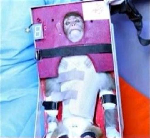 Иран вышлет в космос кошку