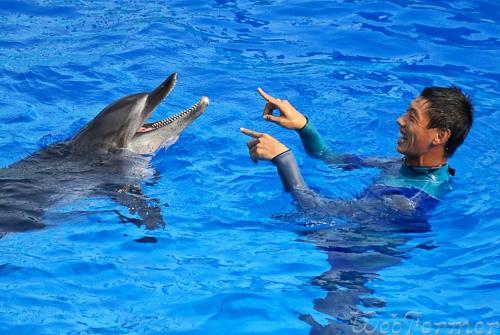 """Речь дельфинов систематизировали при помощи """"кода Парсонса"""""""